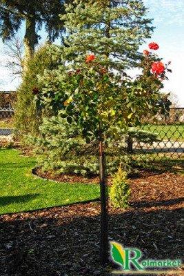 Siatka do osłony młodych drzewek przed dziką zwierzyną (osłonka na drzewa owocowe) 80cm