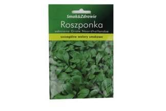 Roszponka warzywna Noordhollandse Smak&Zdrowie
