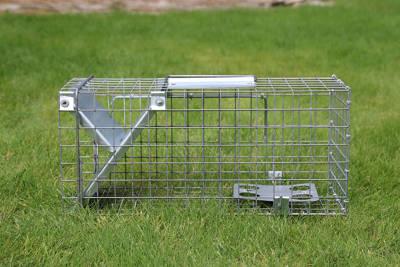 Pułapka na szczury, drobne gryzonie, łasice – jednostronna żywołapka C6